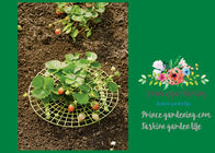 China Plastic Full Grown Garden Plant Supports / Strawberry Plant Supports factory