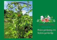 China Flower Supports Plant Stakes , Tall Plant Support For Climbing Plants factory