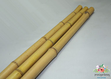 Yellow Bamboo Stakes For Garden