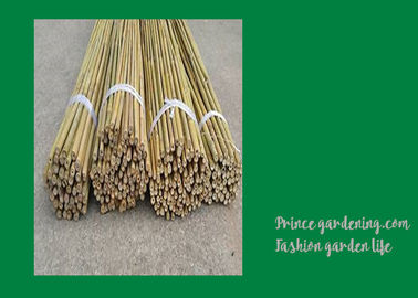 6 Foot Strong Long Bamboo Garden Stakes Nature Straight 6 - 8mm