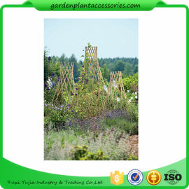 Straight Garden Bamboo Stakes